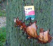 Beschädigter Baum