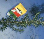 Frische Bio-Kräuter im Winter
