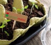 Jungpflanzen samen maier
