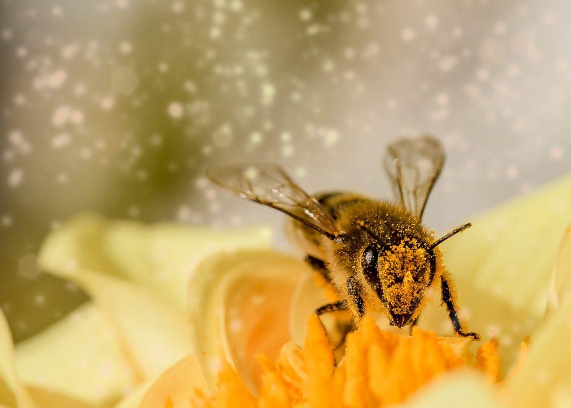 Bienensterben - was kann ich tun?