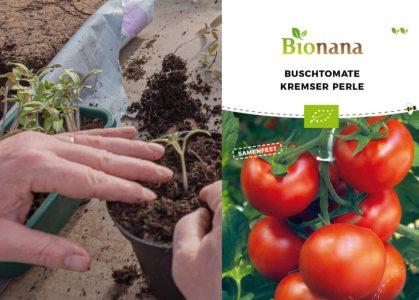 Bionana - Biosaatgut / Biosamen und Bio-Jungpflanzen
