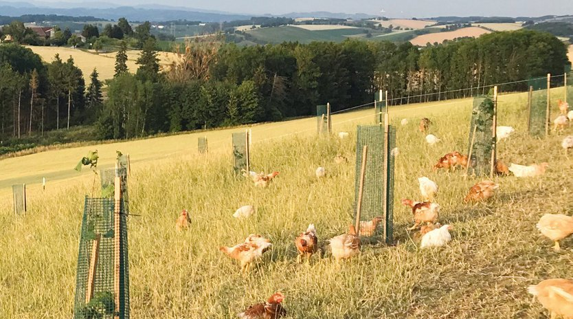Fraisl Biohühner und Biodünger