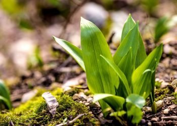 herb.ERT Trockenschrank